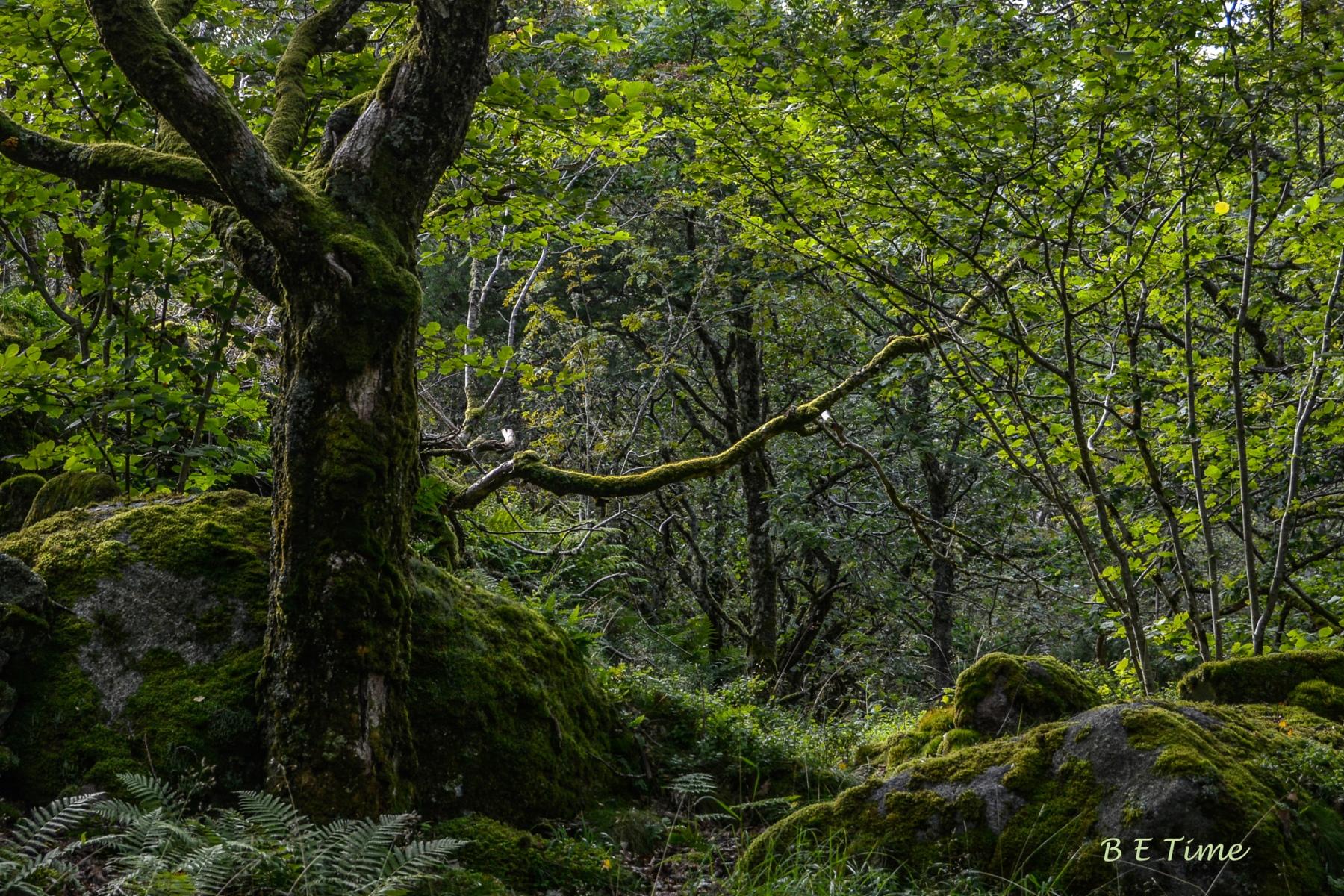 Bjarne-Time-Mosegrodd-kystskog